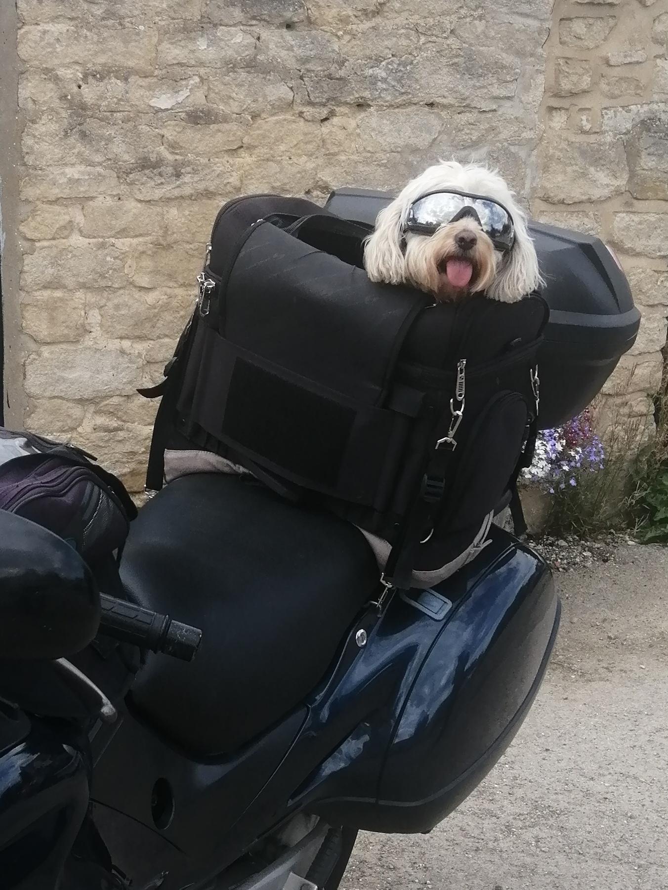 Rosie Cool Dog